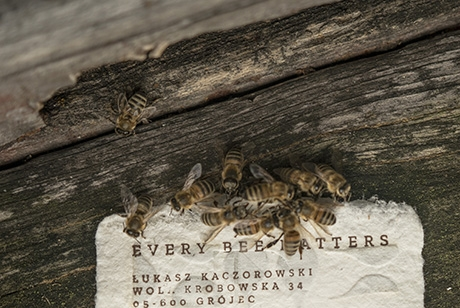 City Bees, 'Bee Saving Paper' : Work : Saatchi & Saatchi